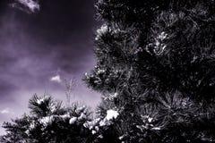 Arbre avec une peu de neige Photo stock