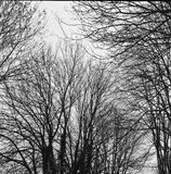 Arbre B&W Photo stock