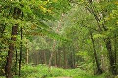 Arbre bancal dans une forêt image stock
