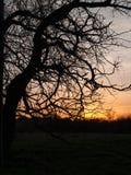 Arbre bien fait au coucher du soleil Photo libre de droits