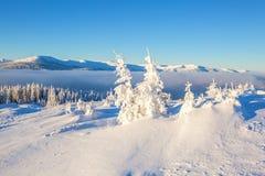 Arbre blanc le jour d'hiver de conte de fées Photo libre de droits