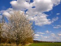 Arbre blanc par le champ sous le ciel bleu avec des nuages au bord de Prague Images libres de droits