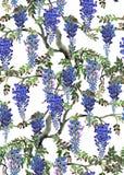 Arbre bleu de glycine Image libre de droits