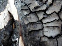 Arbre brûlé Image libre de droits