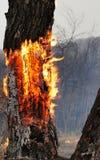 Arbre brûlant dans la forêt photo stock