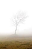 Arbre brumeux Photo libre de droits