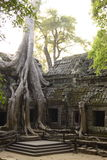 Arbre célèbre au temple d'Angkor Wat photos stock