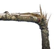arbre cassé Images libres de droits