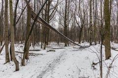 Arbre cassé au-dessus d'un chemin dans la forêt Image stock