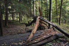 Arbre cassé, forêt d'état de collines de Hocking image stock