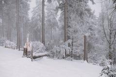 Arbre cassé pendant la forêt, l'hiver et la neige photos stock