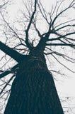 Arbre chauve en hiver photographie stock libre de droits