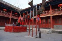 Arbre chinois de chercheur d'Aceint de Pékin Dongyue Tao Temple Photos libres de droits