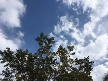 Arbre, ciel bleu nuageux Photos libres de droits