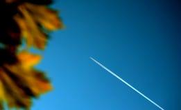 Arbre, ciel et aéronefs Image libre de droits