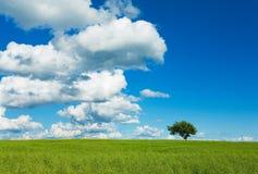 Arbre, ciel et zone Photos libres de droits