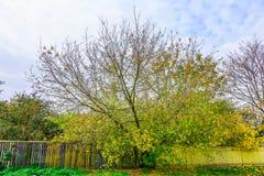 Arbre coloré branchu avec la barrière en automne Photos stock
