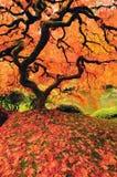Arbre coloré en automne Photo stock
