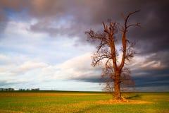 Arbre commémoratif sur le champ vide avant tempête lourde photographie stock libre de droits