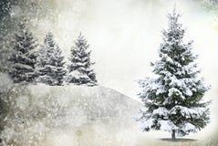 Arbre congelé dans neigeux Images stock