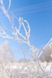 arbre congelé par branchement Images stock