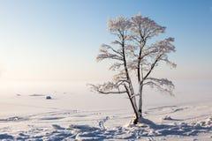 Arbre congelé sur la baie d'hiver et le ciel bleu Images libres de droits