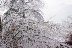 Arbre congelé sur la tempête de pluie verglaçante photos libres de droits