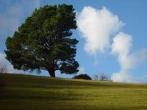 Arbre contre des nuages Images libres de droits