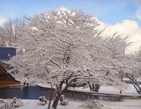 Arbre couvert de neige Photographie stock