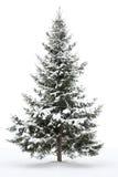 arbre couvert de neige de fourrure Images stock