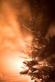 Arbre couvert de neige fraîche la nuit hiver Photo libre de droits