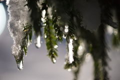 Arbre couvert de neige fraîche la nuit hiver Image libre de droits