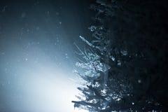 Arbre couvert de neige fraîche la nuit hiver Photos stock