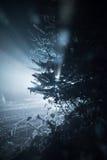 Arbre couvert de neige fraîche la nuit hiver Photo stock