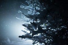 Arbre couvert de neige fraîche la nuit hiver Images libres de droits