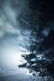 Arbre couvert de neige fraîche la nuit hiver Photographie stock