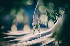 Arbre couvert de neige fraîche la nuit hiver Photographie stock libre de droits
