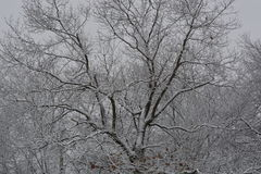 Arbre couvert en hiver photographie stock