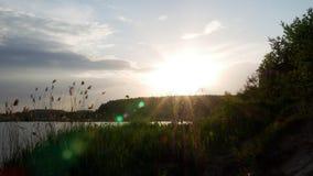 Arbre croissant au lever de soleil 4k banque de vidéos