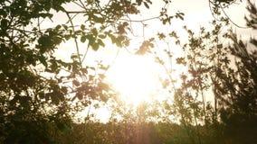 Arbre croissant au lever de soleil 4k clips vidéos