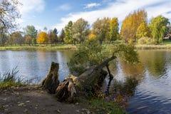 Arbre déraciné en lac ou rivière rural en automne image stock