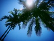 Arbre d'éclat de Sun de ciel bleu Photo stock