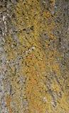 Arbre d'écorce Image libre de droits