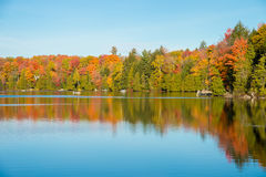 Arbre d'érable dans des couleurs d'automne Photo libre de droits