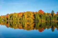 Arbre d'érable dans des couleurs d'automne Photographie stock libre de droits