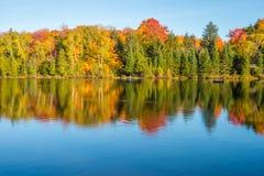 Arbre d'érable dans des couleurs d'automne Photo stock
