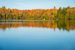 Arbre d'érable dans des couleurs d'automne Photographie stock