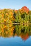 Arbre d'érable dans des couleurs d'automne Image libre de droits