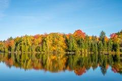 Arbre d'érable dans des couleurs d'automne Photos stock