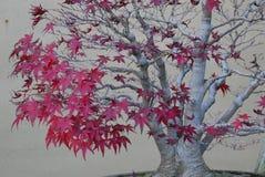 Arbre d'érable de bonsaïs dans le feuillage d'automne Photo stock